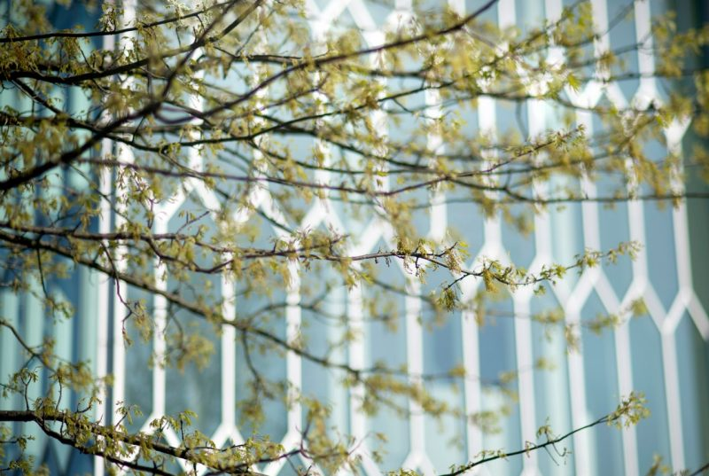 campus scenic photo of the Moss Art Center windows seen through spring branches
